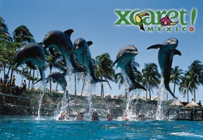 Swim with the dolphins at Xcaret or one of the other Mexican Riviera eco parks